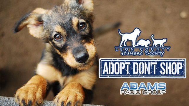 Leon County Humane Society |May